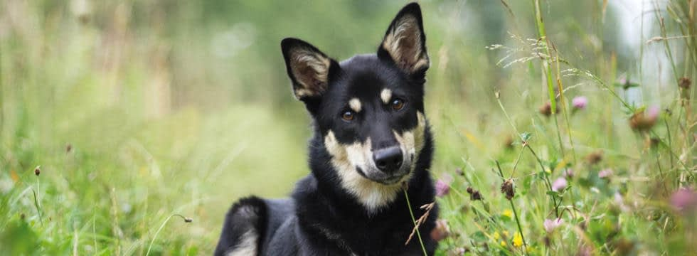 Weiche Ernährung für Hunde mit Durchfall