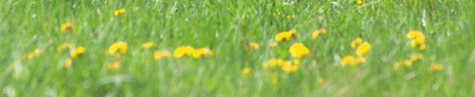 Naturavetal-gesunde-oele-04-2