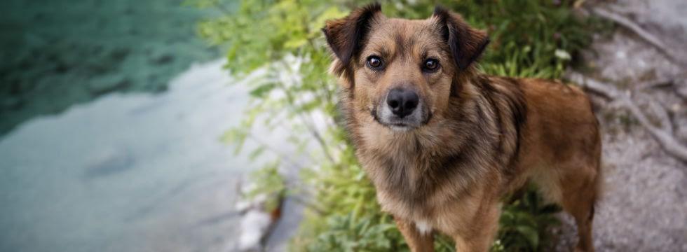 Liste hunde für allergiker 20 Hunderassen