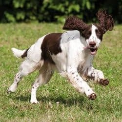 Durchfall_Hund_akuter-Durchfall