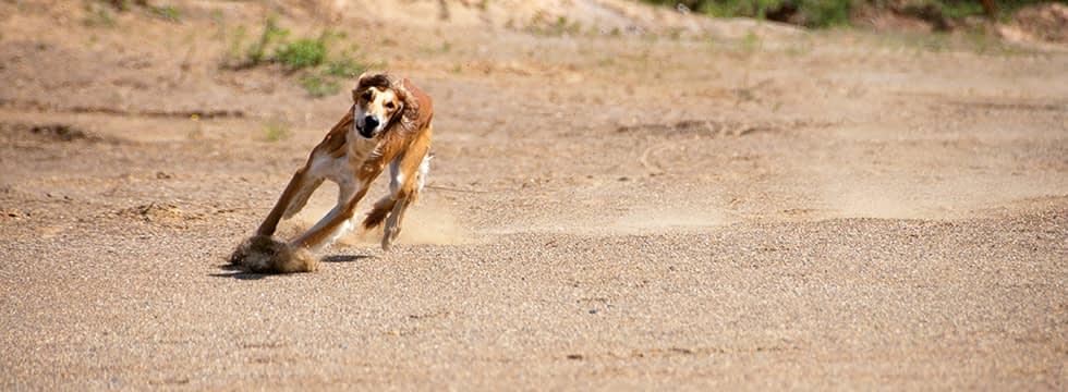 Durchfall Beim Hund Ursachen Futterungstipps Naturavetal